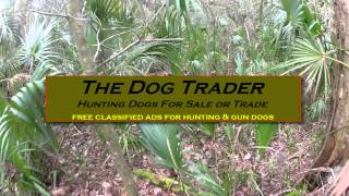The Dog Trader, hog dog hunting wild boar and free ranging pig hunting dogs!