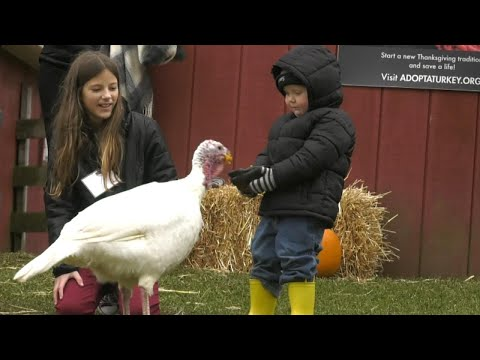Turkeys Celebrate Thanksgiving With Their Own Vegetarian Meal