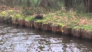 Vie sur le canal de Roanne à Digoin