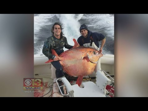 Same Fishing Crew Catches 2nd Rare Opah Fish In 2 Weeks Off Md. Coast