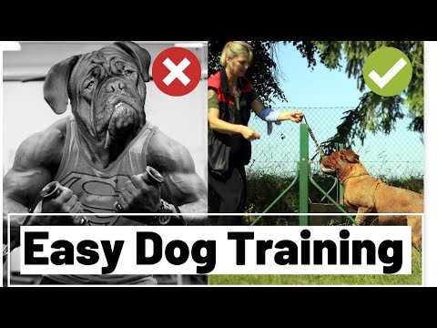 easy-training-for-your-dog,-leash-training