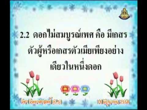 029 540616 P5sci C วิทยาศาสตร์ป 5