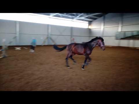 Игра с лошадью на свободе