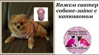 31. Вяжем свитер собаке зайке с капюшоном