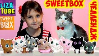 Челлендж Кот Серик и Лиза собирают КОТЯТ из SWEETBOX ПУШИСТИКИ Видео для детей