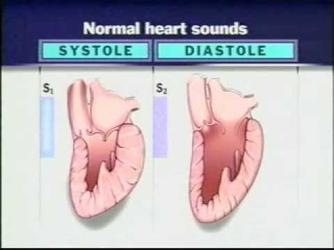 Auscultation of Heart Sounds Part-1 - Listening to Heart Sounds