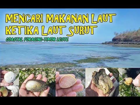 Mencari Siput Di Pantai Dili Selamba Makan Landak Laut Mentah
