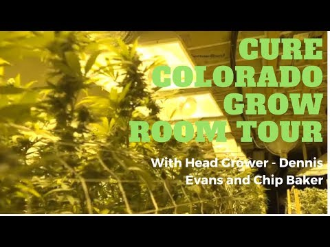 Cure Colorado's Cannabis Grow Room Tour: The Real Dirt Field Report
