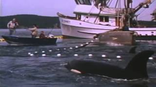 Free Willy 2: The Adventure Home Trailer 1995