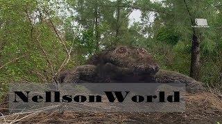Мир Диких Животных- Крокодилы