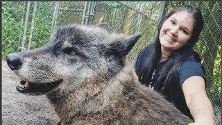 Chú husky lai sói bị vứt vào lò g.i.ế.t vì quá khổng lồ, được giải cứu và cái kết...