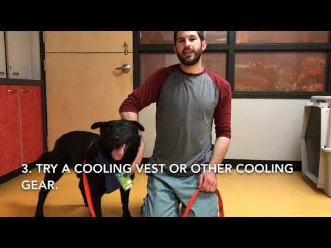 whstips:-how-to-keep-your-dog-cool-and-safe-this-summer