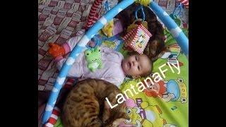 """бенгальская кошка и ребенок - питомник кошек Lantana Fly  - бенгальские котята """"Cattery Bengal Cats"""""""