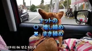 2019 1月6日 鳥取の実家の高齢の父が 元旦より肺炎で入院。 静岡の義母...