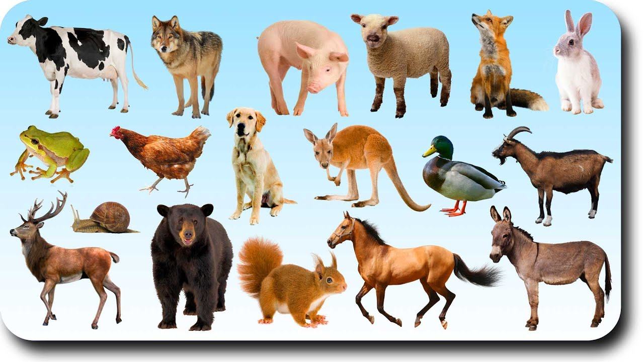 Animal Sounds Song - Animal Sounds for Children to Learn ...