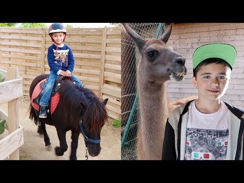 VLOG - SWAN FAIT DU PONEY & NOURRISSAGE DES LAMAS - Parc d'attractions Kid's Island
