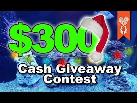 300 Dollar Cash Contest Giveaway Coralust Reefing Frag Friday