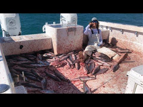 HUGE 400lb DOLPHIN EATS MACKEREL | Commercial Fishing |