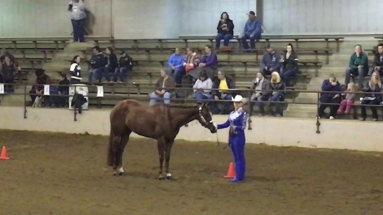 all american quarter horse congress novice amateur showmanship 2016