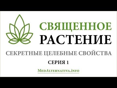 Священное растение. ч.1. Секретные целебные свойства»  (The Sacred Plant. Healing Secrets Exposed)