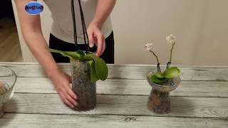 How to Plant Orchids with Water Beads: Step by Step Tutorial - DIY !! Amazing !! ✔