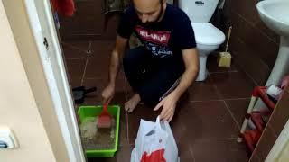 Как чистить кошачьи лотки