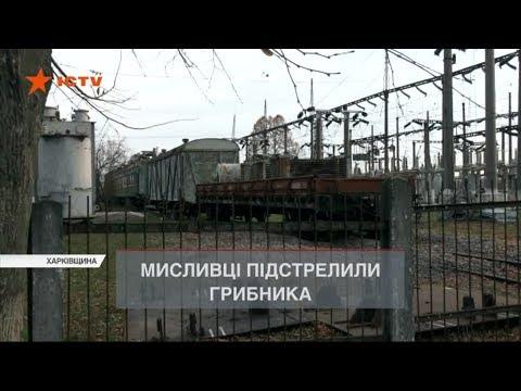 На Харківщині мисливець підстрелив грибника. Випадковість?