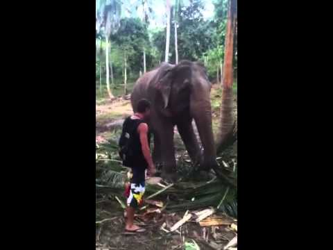 Elephant Attack In Kerala 2012 hqdefault.jpg