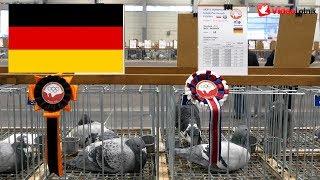Germany, Niemcy, Deutschland - Olimpiada Gołębi, Brieftauben Olympiade   Poznań 2019