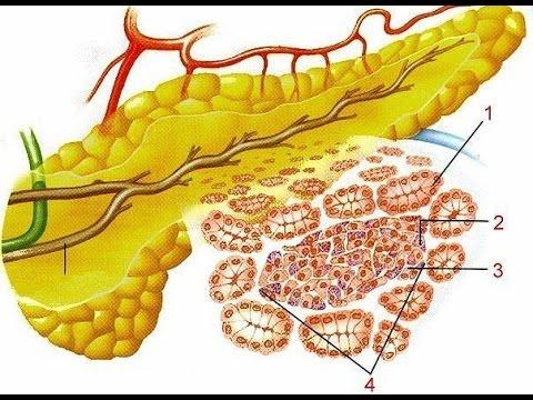 Воспаление поджелудочной железы – симптомы и лечение