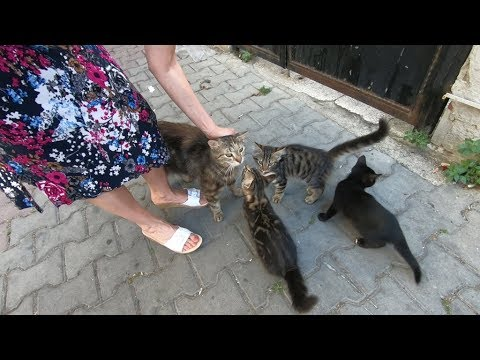 Mom cat and kittens meowing loudly because they are so hungry
