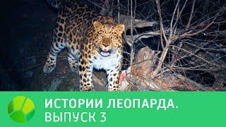 История леопарда  Выпуск 3 @ Живая Планета
