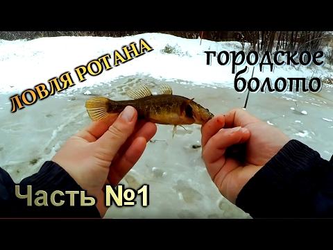 как поймать ротана зимой на болоте