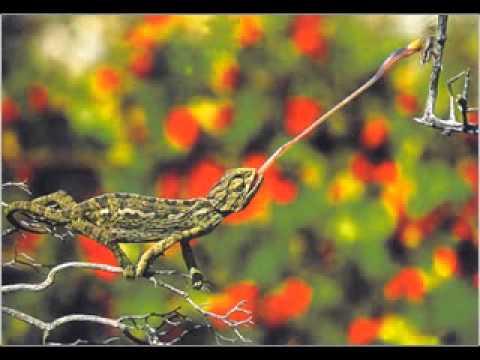 Chameleon - Herbie Hancock (Head Hunters)