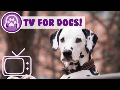 Entertaining TV and Relaxing Music to Calm My Dog!