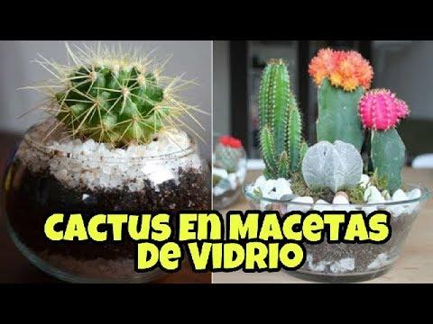 Cactus en macetas de vidrio youtube - Composiciones de cactus ...