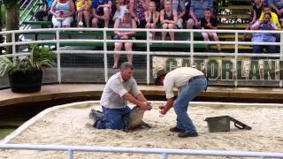 Gator wrestling, the Gator got a good bite in, but