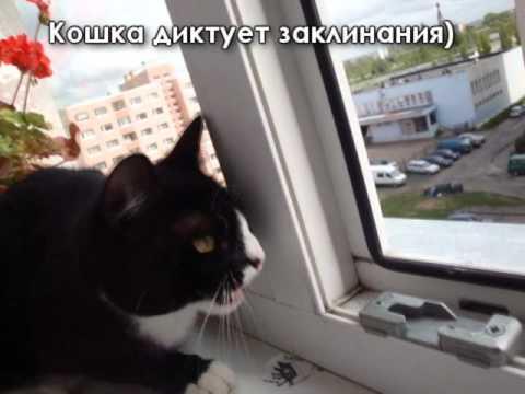 Эпичная битва кошки против голубя