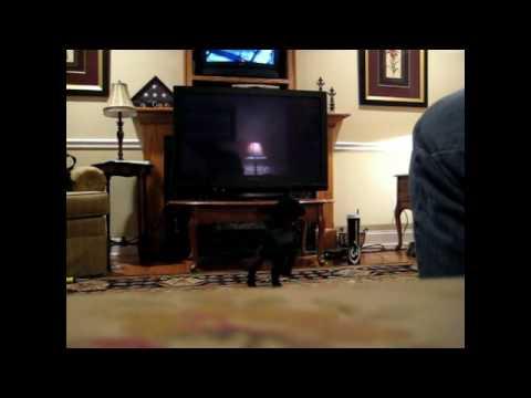 panasonic 50 plasma tv 720p reviews