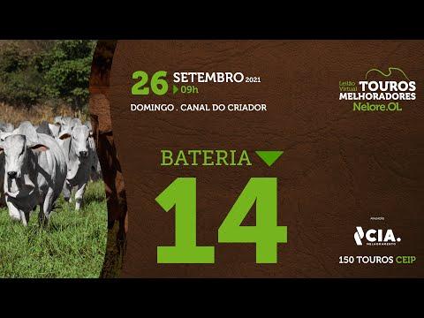 BATERIA 14 - LEILÃO VIRTUAL DE TOUROS 2021 NELORE OL - CEIP