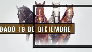 Vidéo de la course PMU TODOPODEROSO H