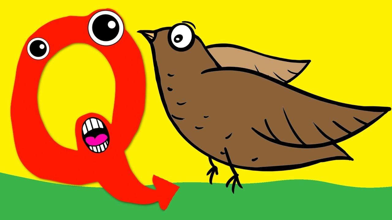 Learn the Alphabet Animals - Letter Q - QUAIL