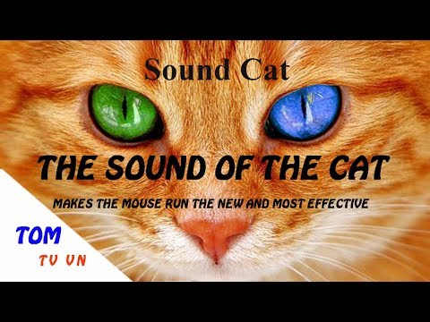 The Sound Of The Cat Makes The Mouse Run The New And Most Effective