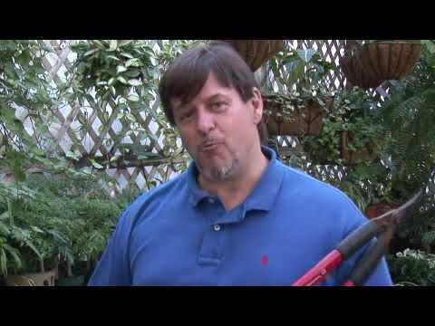 How to Prune Italian Plum Trees