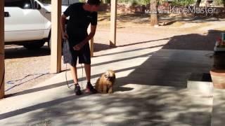 Sin City K9 / No Limit Dog Training