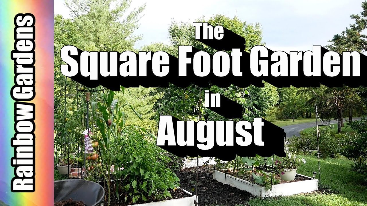 The Square Foot Garden In August! Tomatoes, Corn, Watermelon, Bell Peppers,  More
