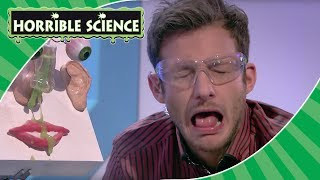 Horrible Science - Funny Experiments | Universal Children's Day | Science for Kids