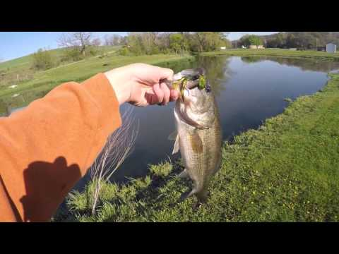 2017 Project Z Breaking Down the Bait - Trout Eye Finesse Jigheads from YouTube · High Definition · Duration:  56 seconds  · 158 views · uploaded on 19.07.2017 · uploaded by Z-Man Fishing TV