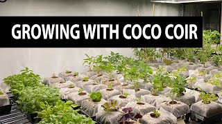 Plants Like Coco Coir (And You Will Too)