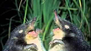 самые смешные животные фото, видео слайд шоу с животными.